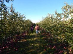 Apple picking with my neices
